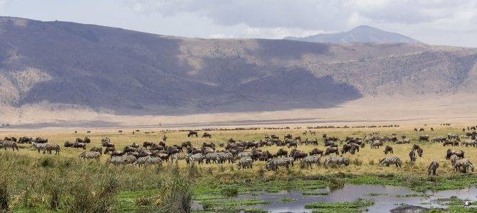 Tripping on the Ngorongoro