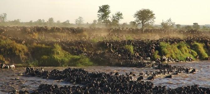 Tripping on the Serengeti