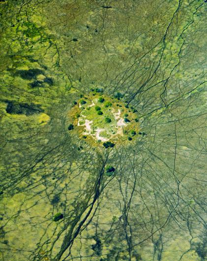 Hippo paths in the swamp