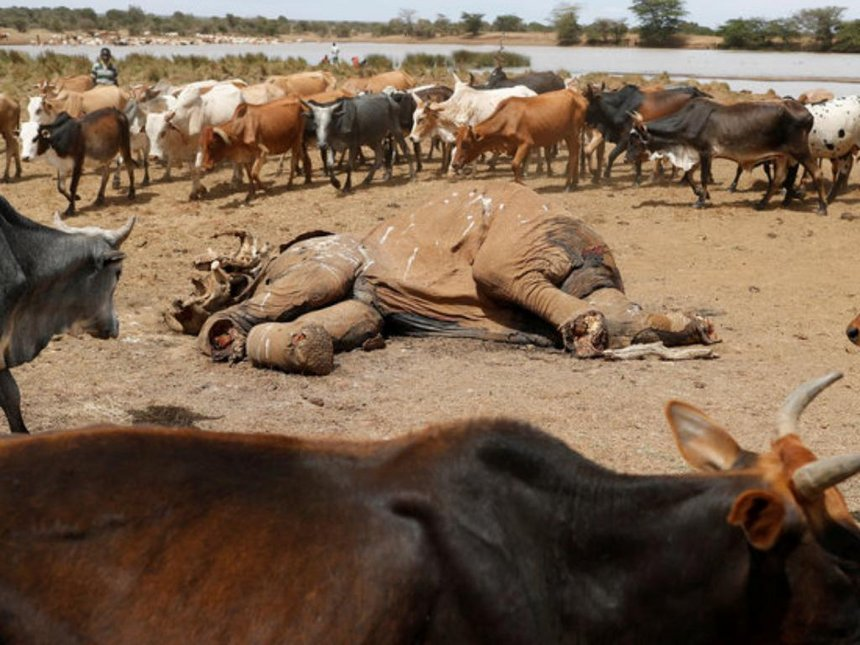 Elephant shot by invading herders
