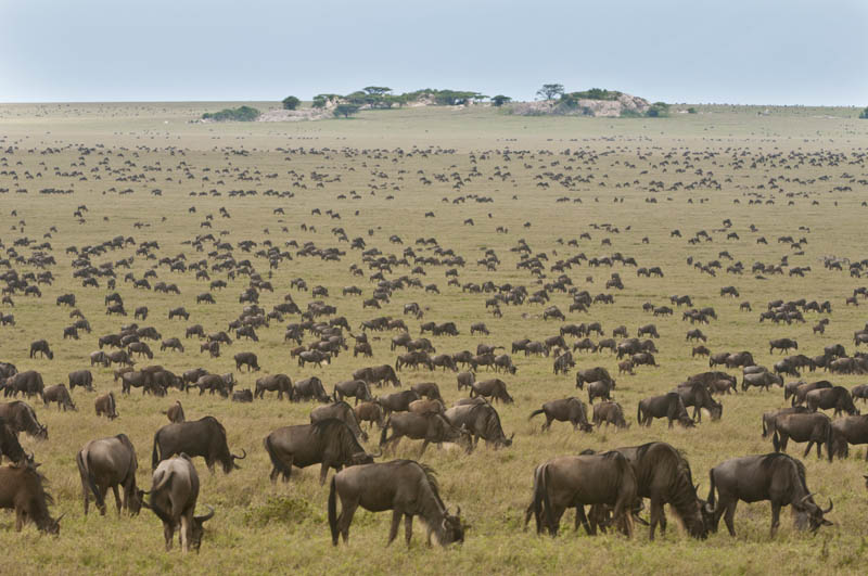 Migration in the Ngorongoro