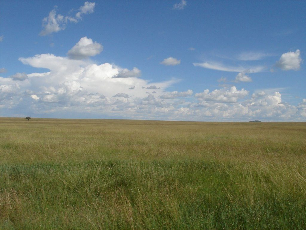 These plains are mostly in the Ngorongoro Crater Conservation area